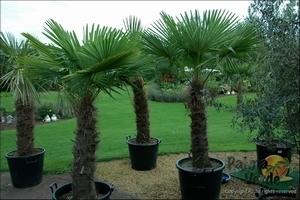 PalmBoom Kweekset